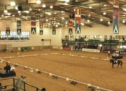 LED Flood Light inside Horse Arena
